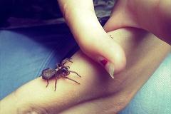 Foto-Galerie_bushcraft-sauerland_insekten_entdecken2_640x480